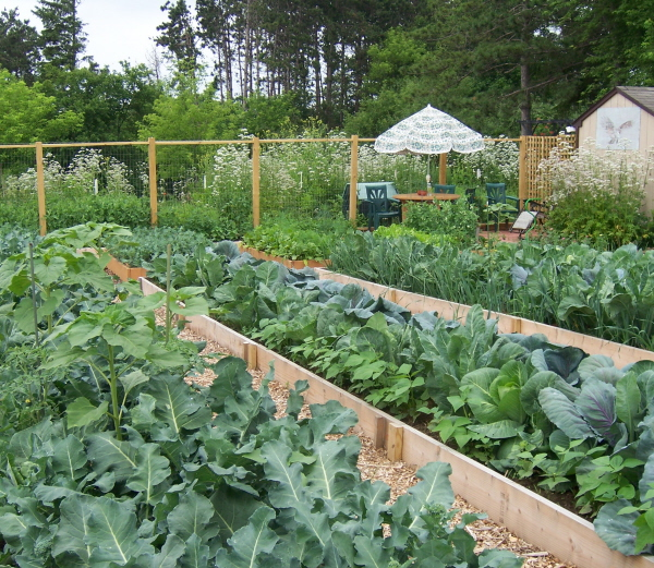 organic-gardening-raised-beds