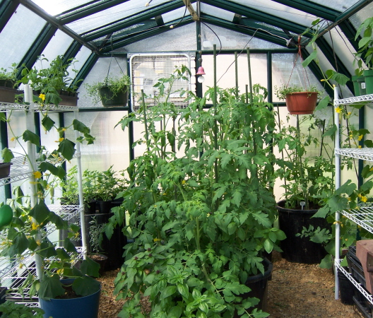 Planter Tomato System Makes It Easy to Grow Indoor Tomatoes