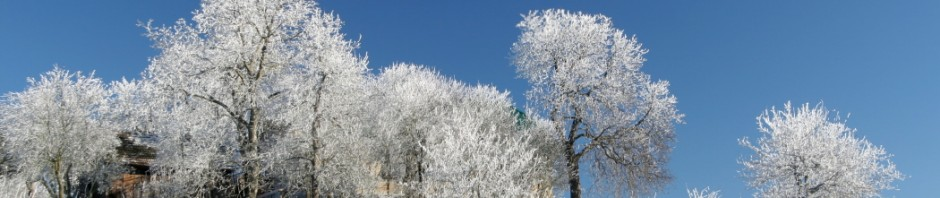 Early Winters White Trees