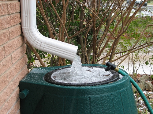Rain Barrels: Free Water For Your Lawn And Garden